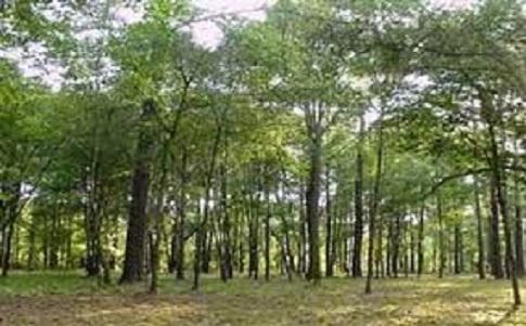 La protection des forêts pour atteindre les objectifs du développement durable