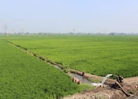 مزارعون:الموسم الشتوي يبشر بإنتاجيةعالية ويتعهدون بحماية منشآت الري