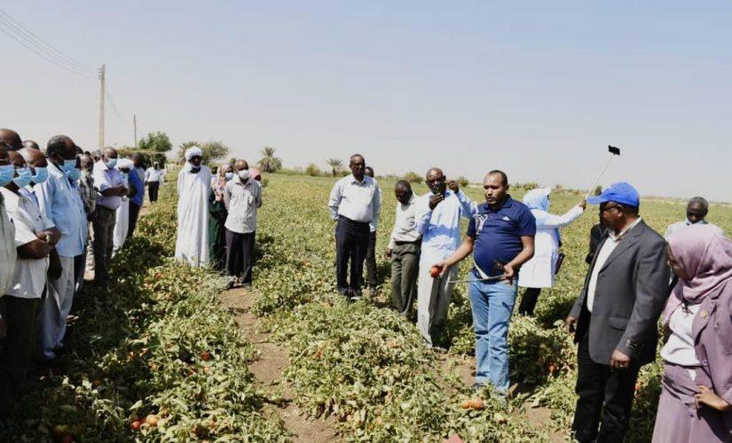 جامعة الجزيرة:الصادر البستاني أنجح السبل لتجاوز الضائقة الإقتصادية