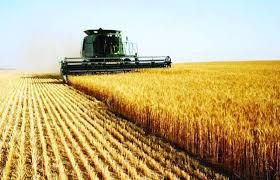 وزير المالية ووالي الشمالية يشهدان حصاد محصول القمح بمشروع امطار