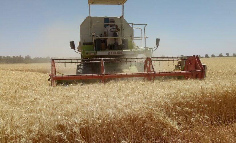 الشمالية: عمليات حصاد القمح تبشر بانتاجية عالية