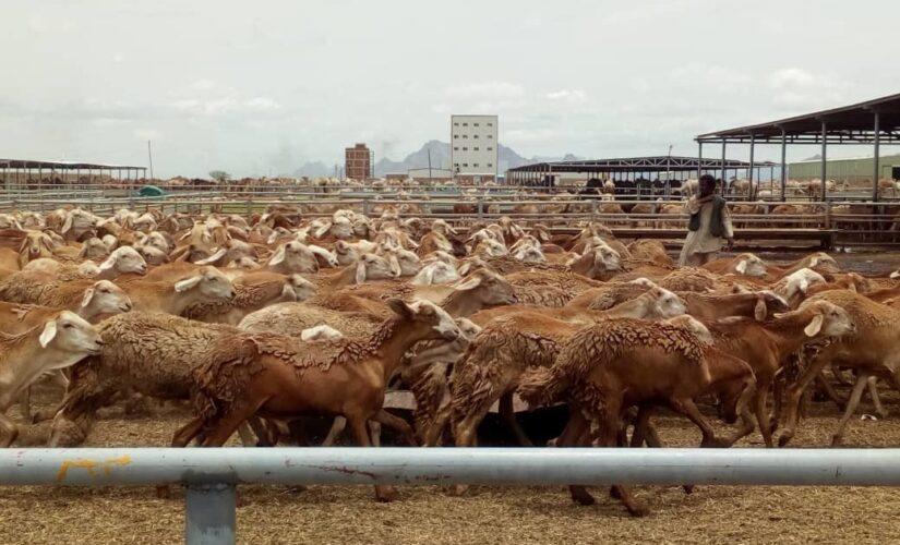 وزير الثروة الحيوانية يقف على معوقات الصادر بمحجر سواكن
