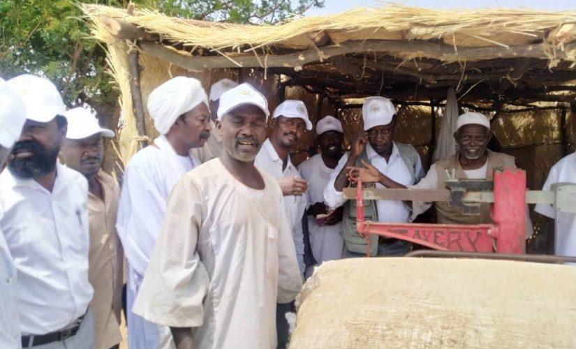 بدء عمليات جني القطن بمشروع خور أبو حبل الزراعي