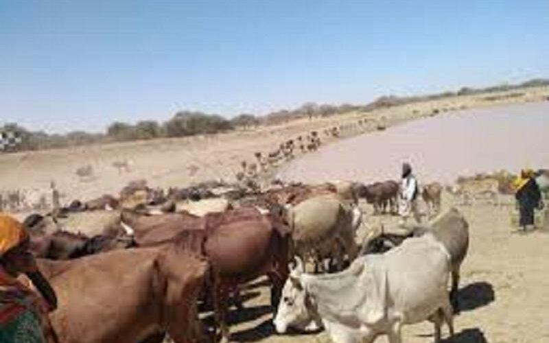 نجاح نفرة جباية الأنعام بالطويشة بشمال دارفور