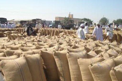 .الوارد وأسعار الذرة لسوق محاصيل القضارف بالأردب