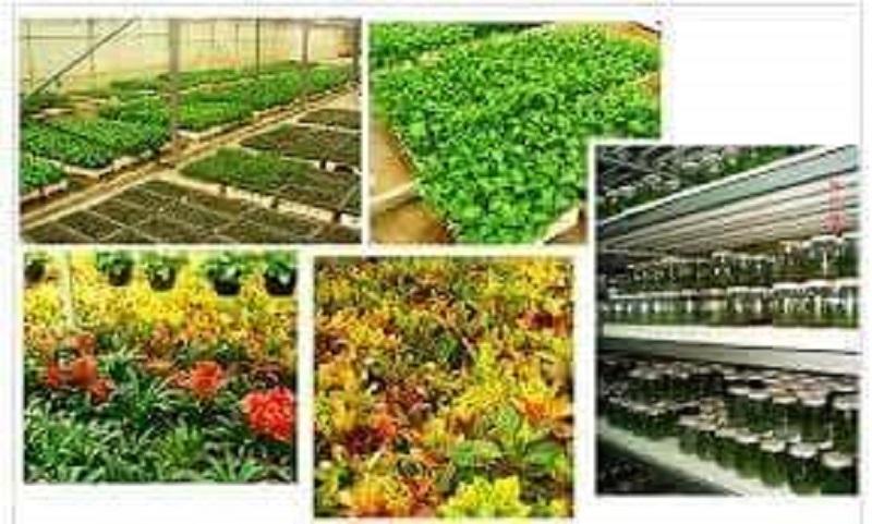 زادنا تفتتح أكبر معمل لزراعةالأنسجة النباتية بأفريقيا والشرق الأوسط