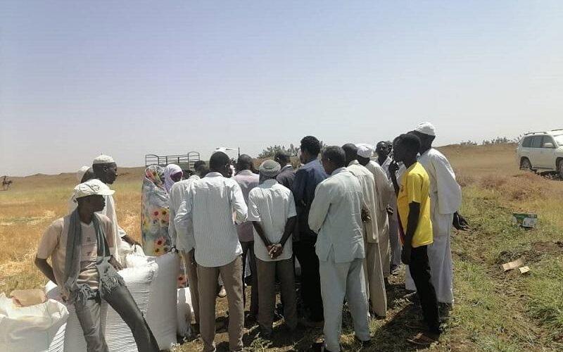 تدشين حصاد القمح بولاية سنار