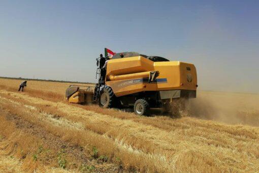 حربي يدشن حصاد القمح بمشروع حلفا الجديدة الزراعي