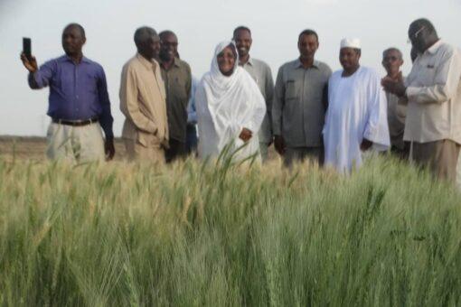 اللجنة الفنية لإنجاح الموسم الشتوي تقف على ترتيبات حصاد القمح