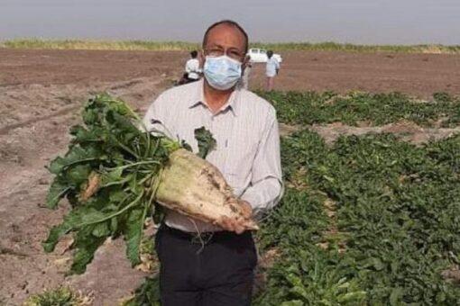 جامعة الجزيرة تستصلح أراضٍ زراعية لإنتاج بنجر السكر بالنيل الأبيض