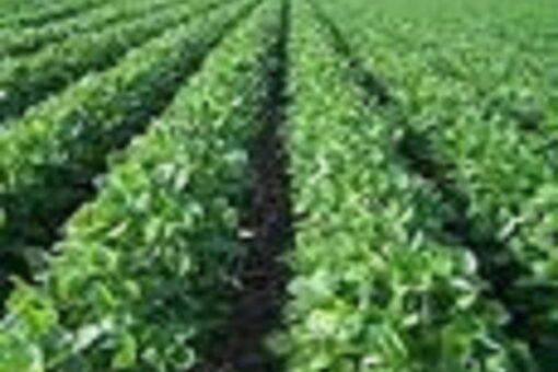 الشمالية:التوقيع على عقد تنفيذ الوثبة الرابعةلكهربة المشاريع الزراعية