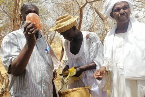 غرب كردفان تحتفل بنفير حصاد الصمغ العربي