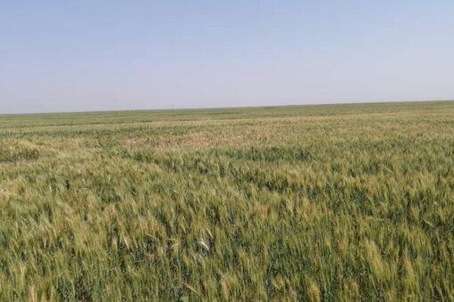اكتمال الاستعدادت لزراعة اكثر من ثلاثة مليون فدان بالنيل الابيض