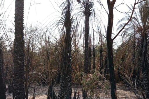 حريق يقضي على النخيل بثلاث سواقي بمنطقة جلاس