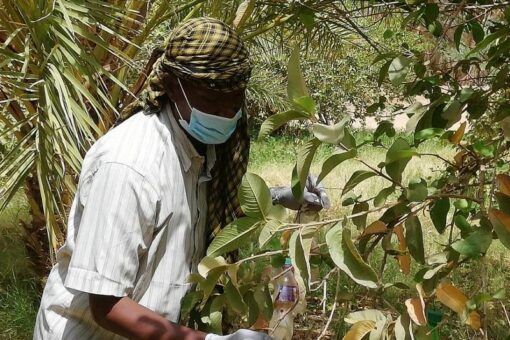 حملة لمكافحة الآفات الزراعية وحماية المحاصيل بمروى