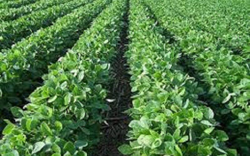 ترتيبات مبكرة لإنجاح الموسم الزراعي بشمال كردفان