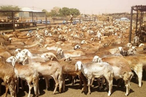 الثروة الحيوانية تطرح مشروع شراكات متكامل لصادرات اللحوم بمؤتمر باريس