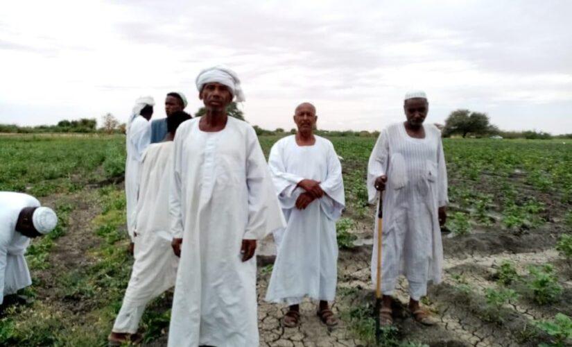 مزارعو ام رمته بالنيل الأبيض: شح الوقود يهدد الموسم الزراعي