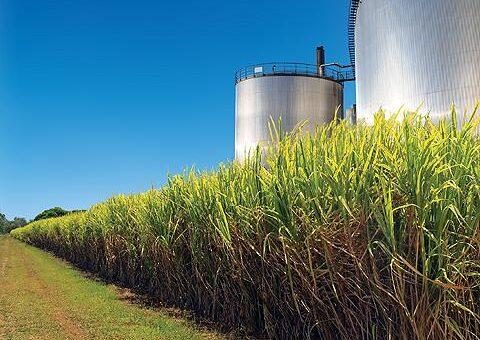 استراتيجية للتوسع في المنتجات المصاحبة لصناعة السكر