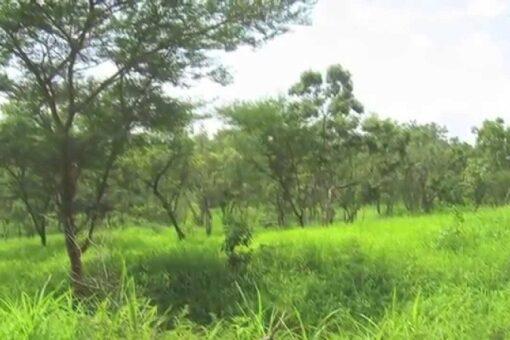 غابات شمال كردفان تسهدف زراعة 5 آلاف فدان بالاحزمه الشجرية