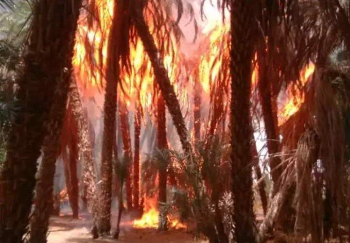 حريق يأتي على خمسة عشر ألف نخلة بمحلية دلقو