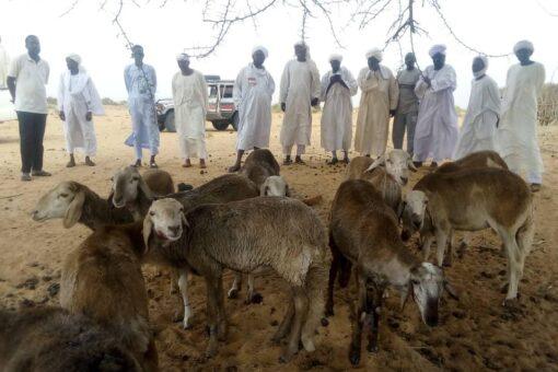 زكاة شمال دارفور تدشن برنامج تمليك الأنعام للأسر الفقيرة