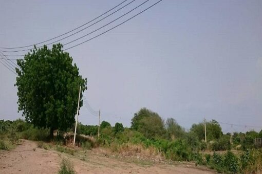 حملة تشجير لمكافحة التصحر بولاية سنار