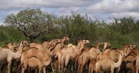 وزير الثروة الحيوانية يبحث تحديات قطاع الثروة الحيوانية بمنطقة البطانة