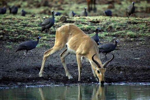 مجلس البيئة يعلن بدء مشروع تعزيز المحميات الطبيعية