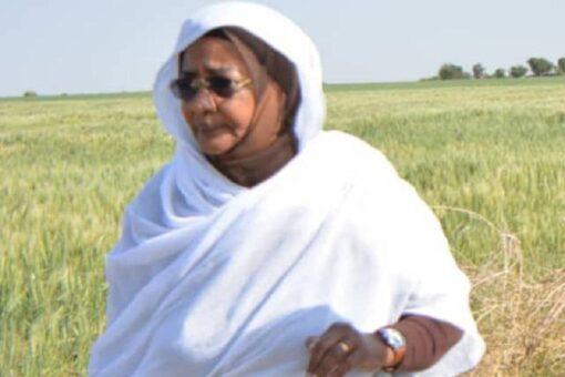 وصول 45 طن من تقاوى صغار المزارعين لولاية النيل الابيض