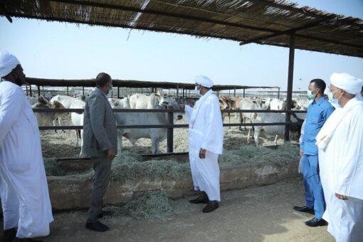 حميدتي يشدد على دراسة أسباب إعادة بواخر صادر الماشية