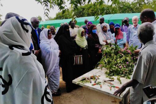 ختام المشروع التدريبي لإنتاج الفاكهة وشتول الزينة بجامعة الجزيرة