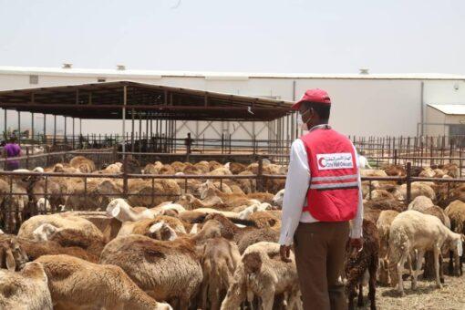الهلال الأحمر القطري بالسودان يبدأ توزيع لحوم الأضاحي