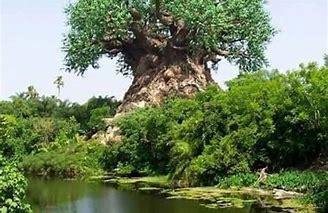 والي شمال كردفان يدشن مبادرة غرس 2مليون شجرة هشاب