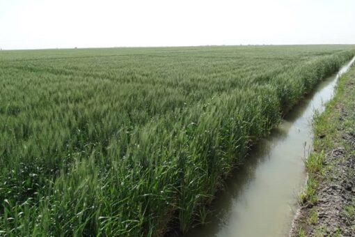وزير الإنتاج بنهر النيل:سعي جاد لحل مشاكل الزراعة