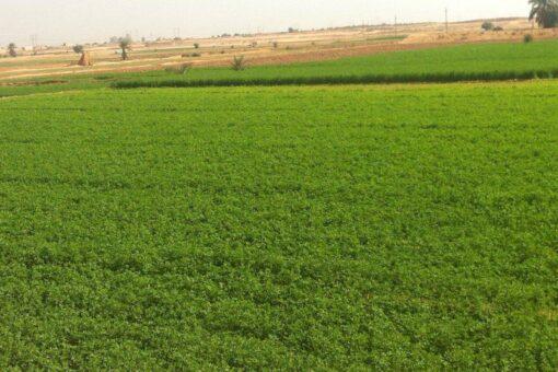 """الخارجية: مراجعة قرار إلغاء مشروع """"خيرات البحرين الزراعي"""" بالولاية الشمالية"""