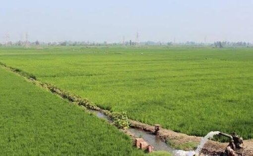 وصول كميات من المبيدات لمكافحة الآفات الزراعية بشمال كردفان