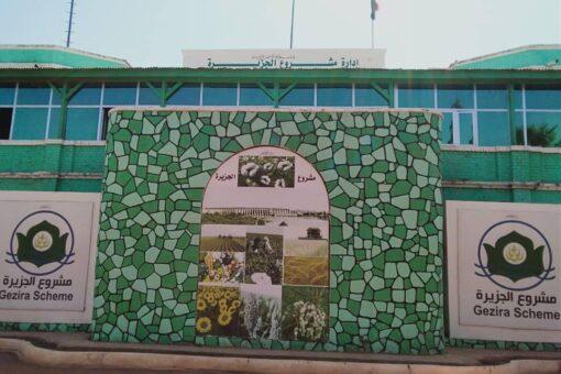محافظ مشروع الجزيرة يشهد بداية عمليات جني محصول القطن