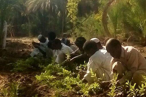 التلفزيون القومي يطلق أول برامج الثورة الزارعية قريباً
