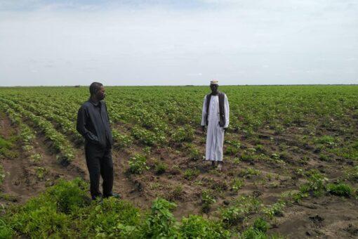 شركة الوفاق الزراعية بالسوكي تطالب بدعم الانتاج