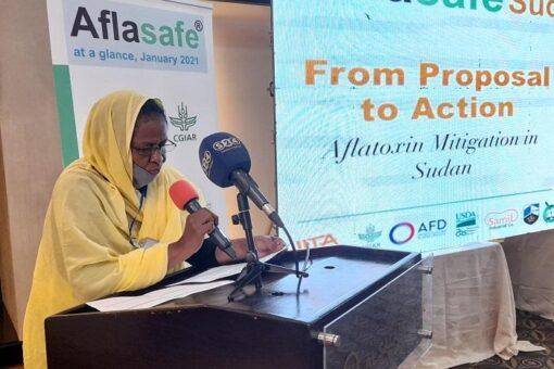 """فدوى عبد الرحمن: مكافحة """"الافلاتوكسين"""" يحسن الغذاء لملايين الأسر السودانية"""