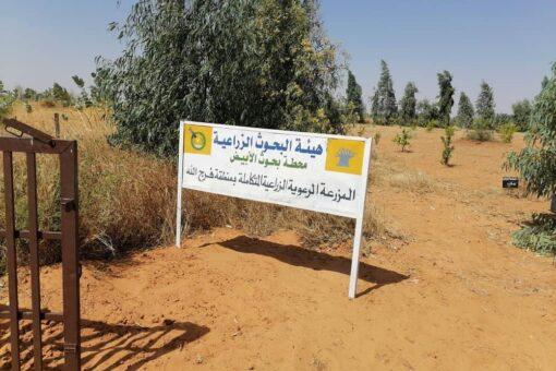 البحوث الزراعية بالأبيض تنفذ برنامج يوم الحقل السنوي