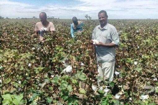 موسم زراعي مبشر بمشروع الرهد الزراعي هذا العام